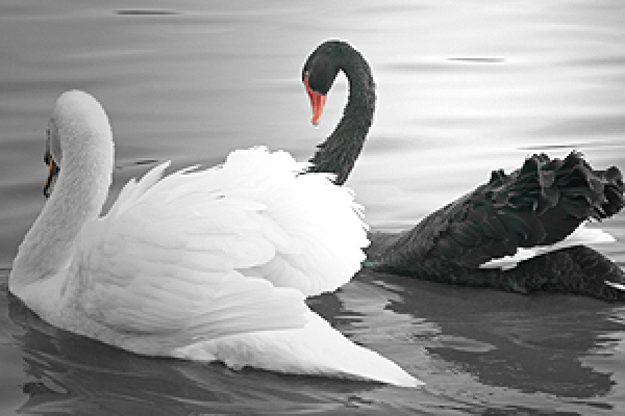 Cyber Insurance: Black Swan or Golden Goose?